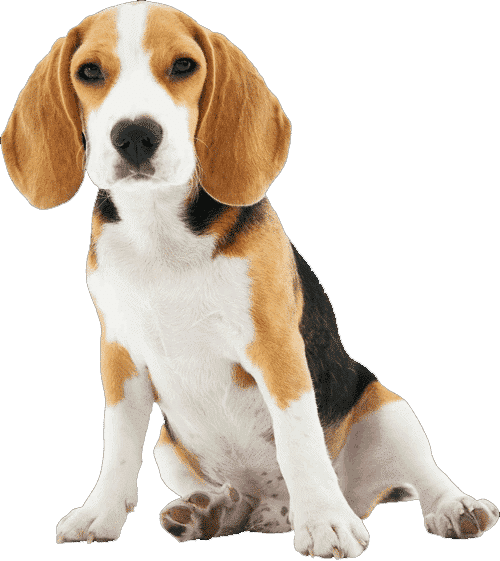 KING KALM CBD Oil Products For Pets & Dogs